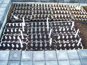 seeds for tomatoes, basil, lettuces, onions, carrots, and cucumbers