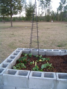Second raised bed