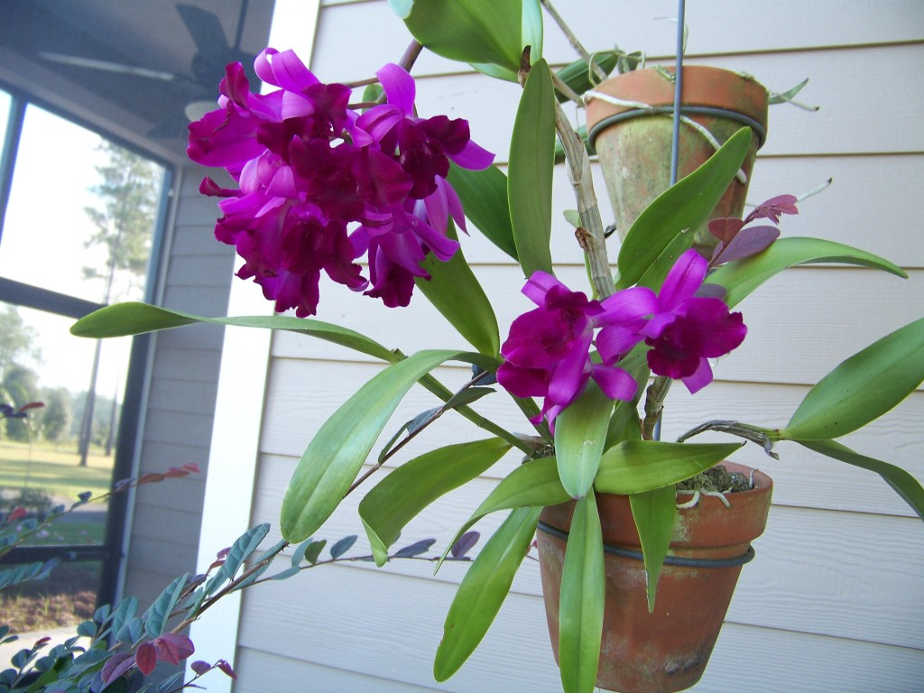 Second orchid to bloom